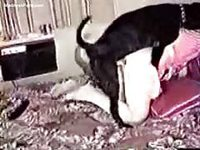 Classic animal sex video featuring a teen getting it from a dog for the first time