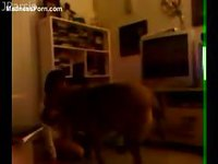 Cute teen girl in tiny shorts having fun with her dog on the living room floor