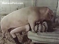 Tiny woman pinned and fucked by an enormous pig in this amateur zoo sex movie