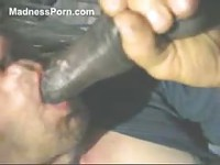Big black horse cock getting sucked by an animal sex loving never before seen wife