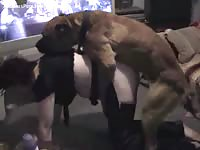 Plump married woman dressed in crotchless chaps being fucked by a K9