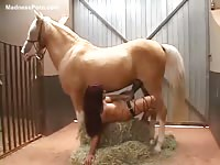 High-quality recent animal sex video featuring a MILF banging a horse