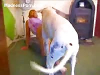 Recently recorded homemade beastiality movie featuring a blonde MILF banged by her dog