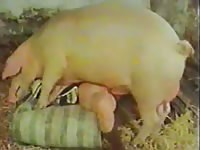 Classic homemade porn movie features cheating wife mounted and fucked by massive Pig