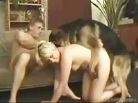 High-end bestiality sex compilation movie features young babes being drilled by large K9s