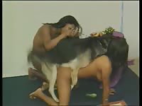 Coed tramp getting her shaved fuck hole screwed by an enormous K9 in this bestiality movie