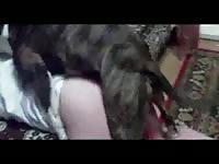 This awesome hardcore animal fucking movie features a stunning coed enjoying dog cock