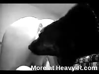 Married whore in black thigh high stockings takes a wonderful bestiality creampie in this flick